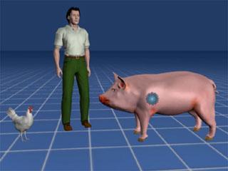 flu babi & manusia